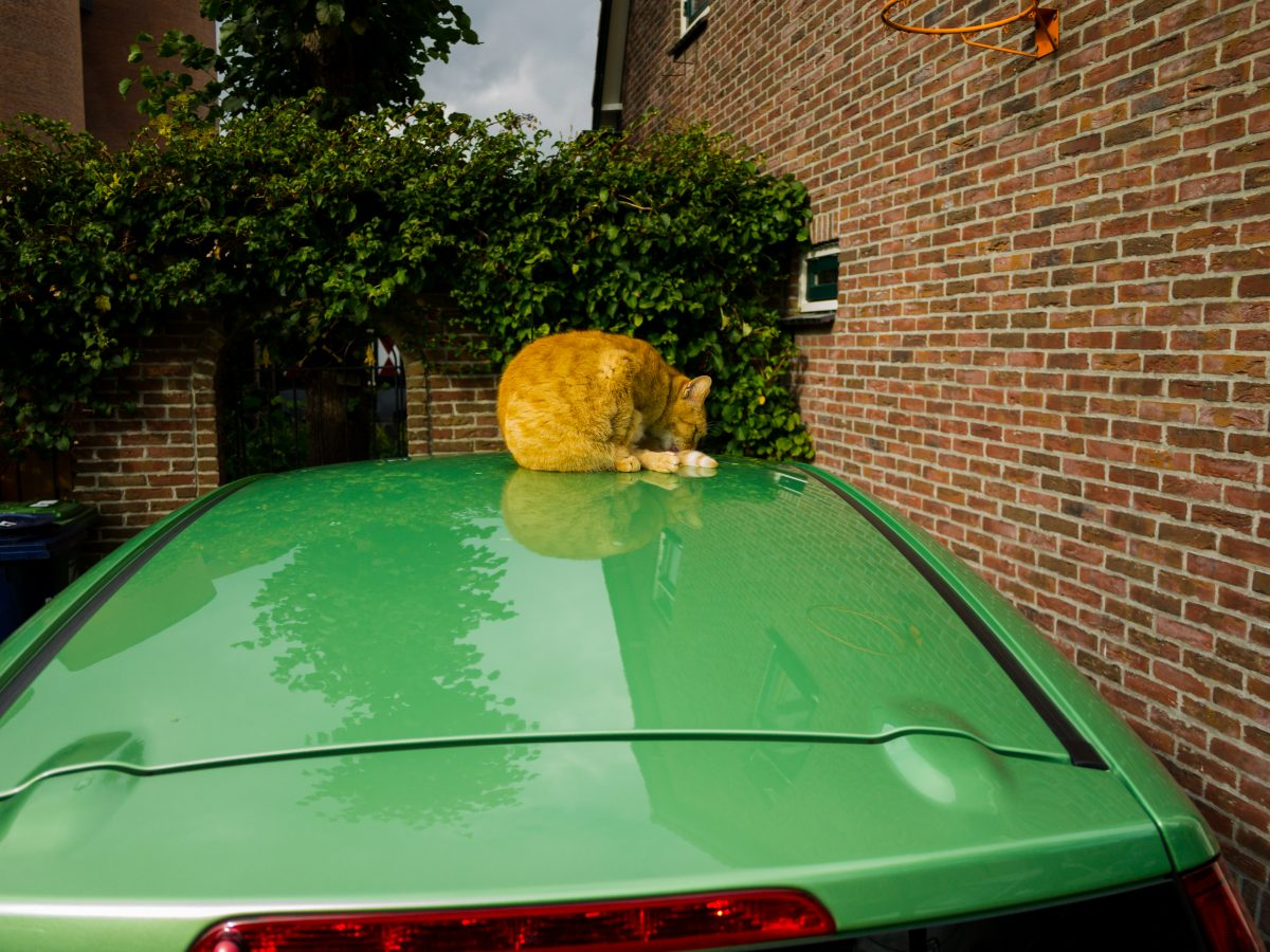 Cat on green car roof