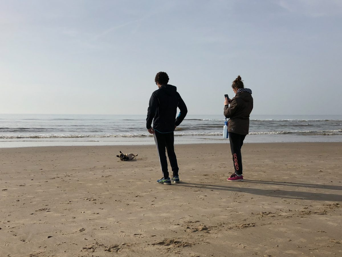 Dog, Egmond aan Zee