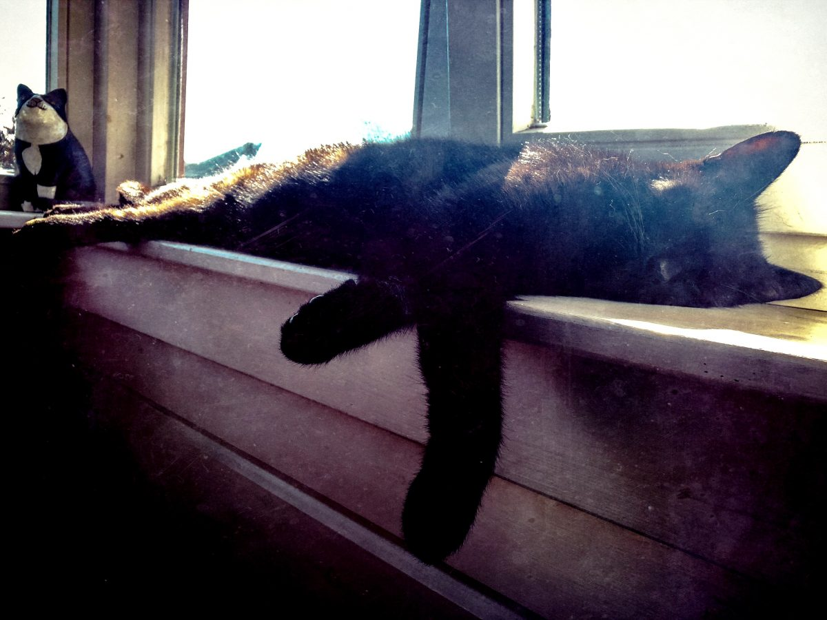 Black cat in windowsill